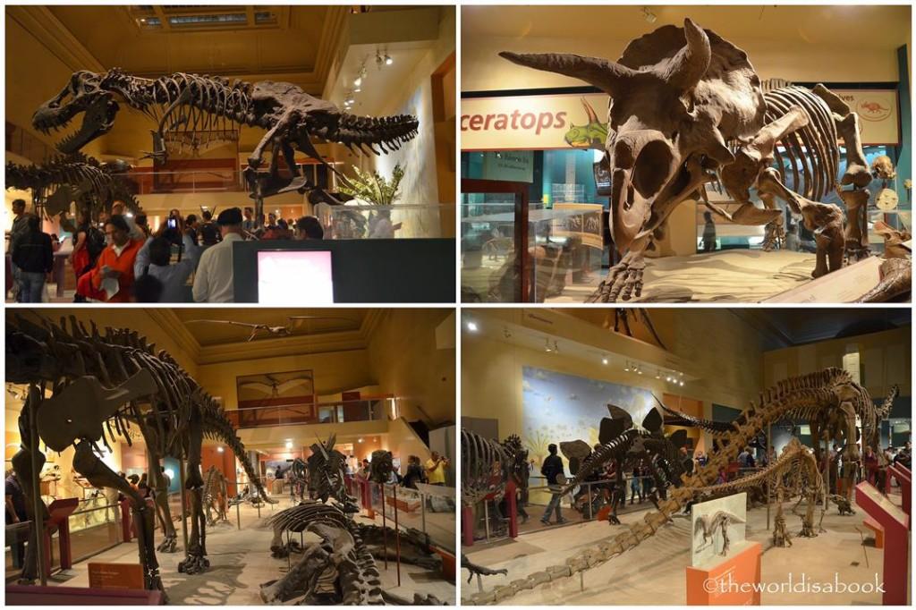 Natural History Dinosaurs