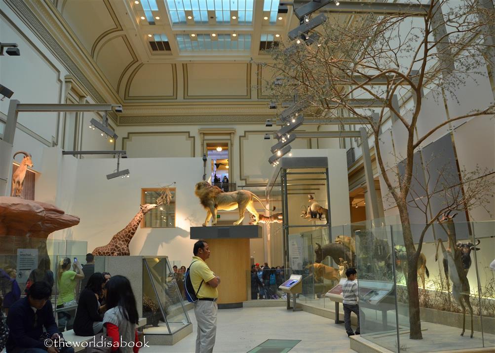 Natural History Hall of Mammals