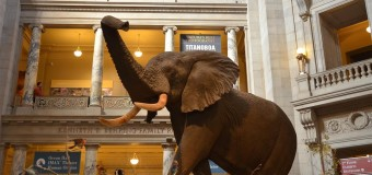 The Smithsonian National Museum of Natural History