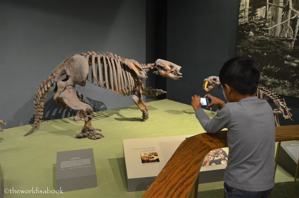 Natural History dinosaur