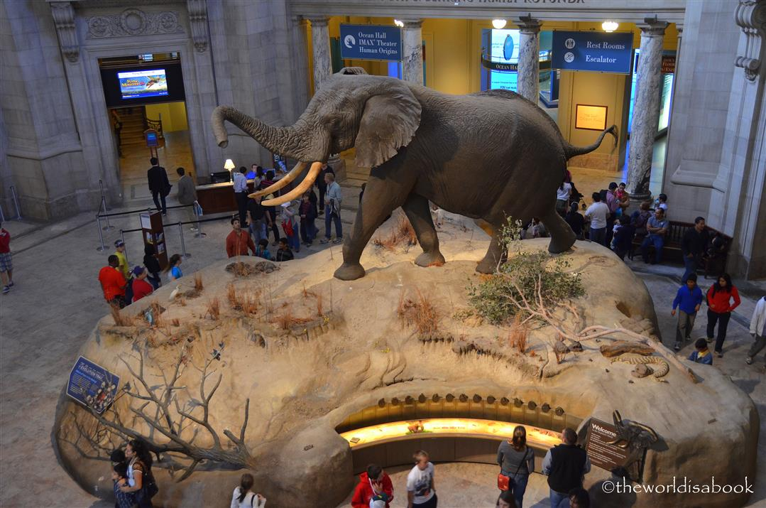 Museo Smithsonian.The Smithsonian National Museum Of Natural History The World Is A Book