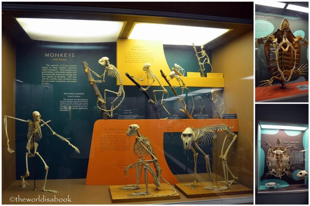 Natural History monkey