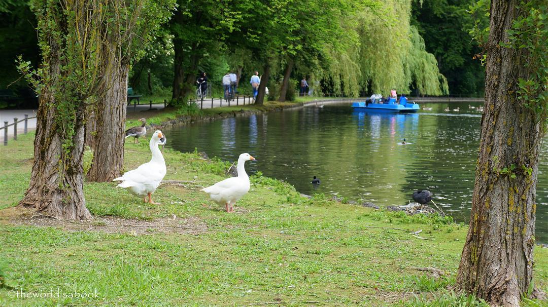 English Garden geese