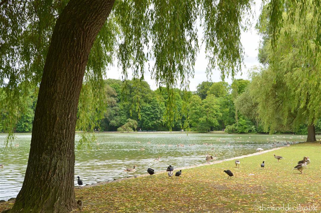 English garden birds