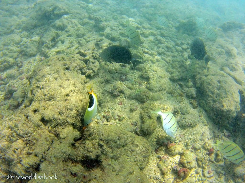 Hanauma Bay snorkeling