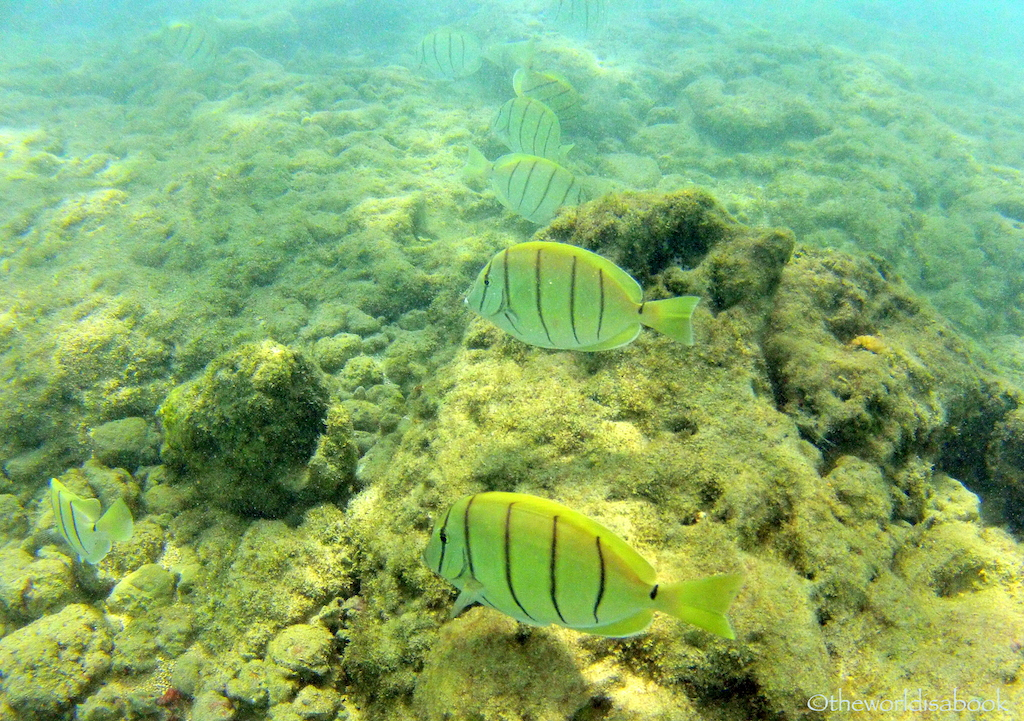 Hanauma bay fish in line