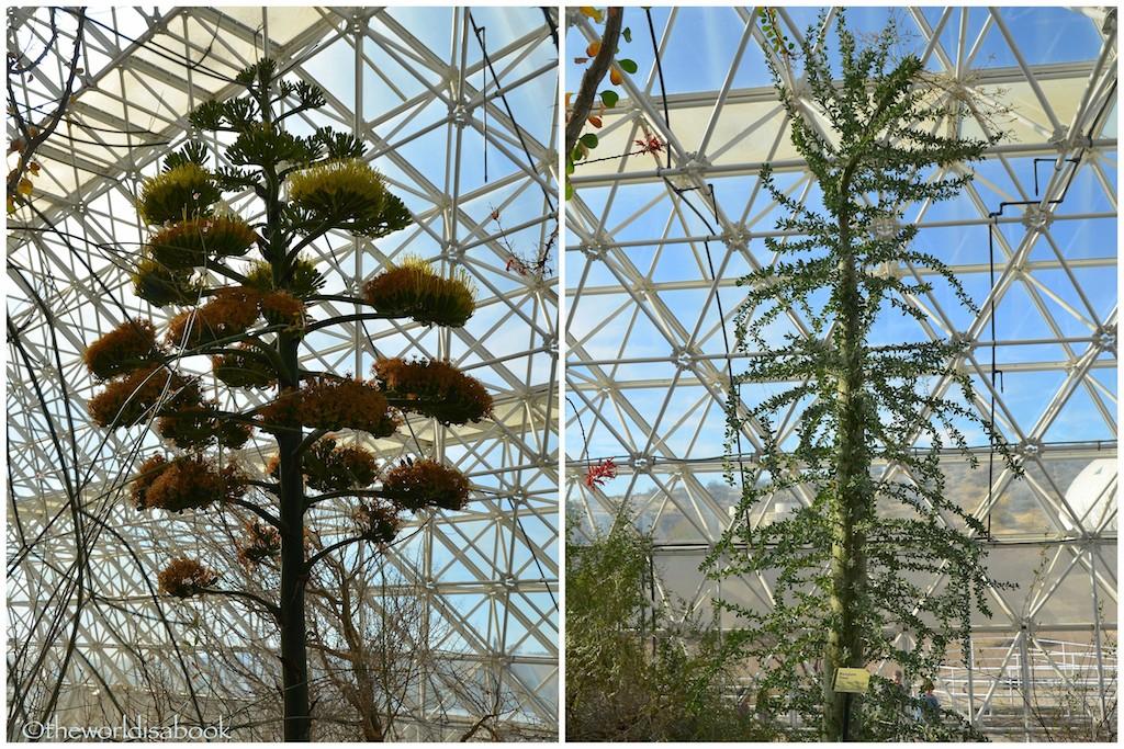Biosphere 2 trees