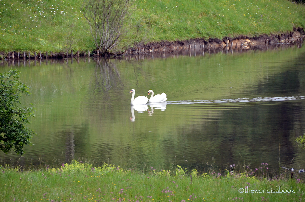 Linderhof Palace swans