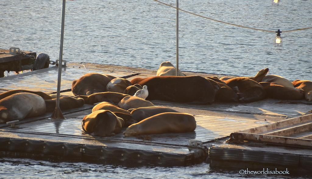 San Diego sea lions