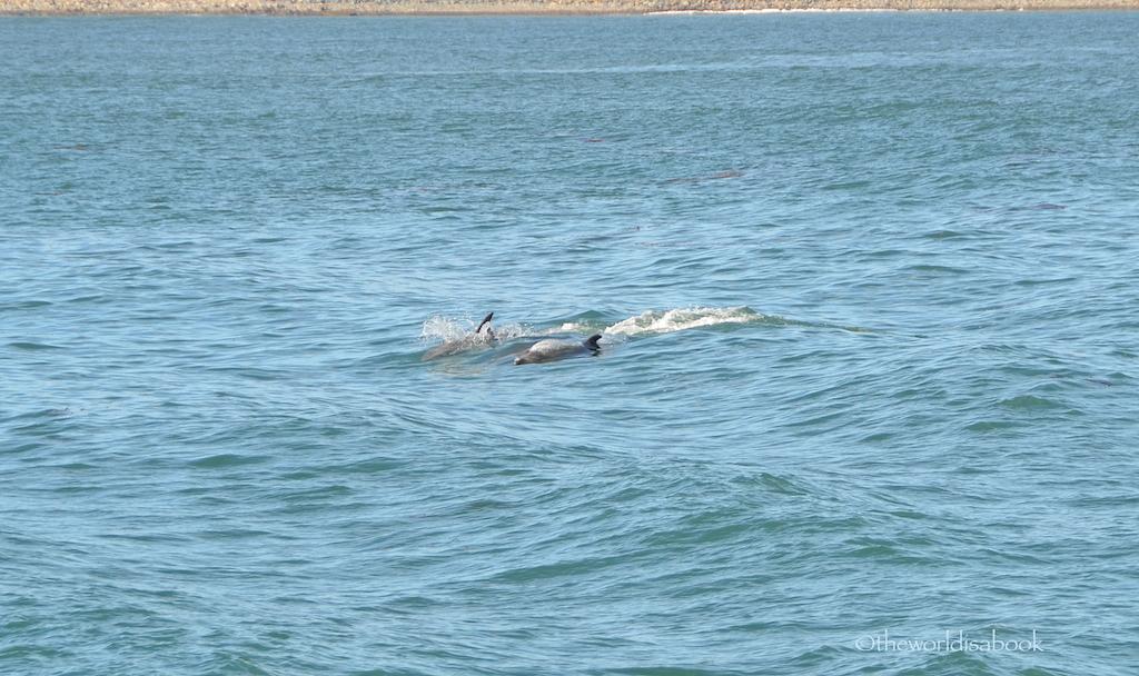 San diego dolphins