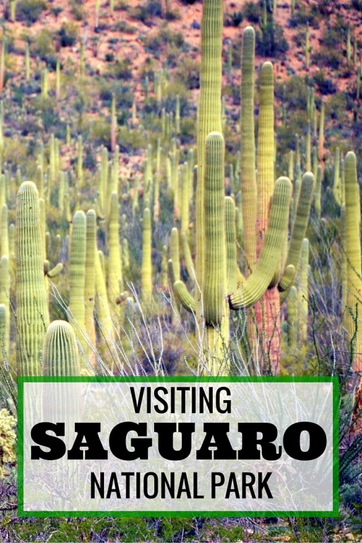 SAGUARO national Park with kids