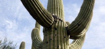 Exploring Saguaro National Park Arizona