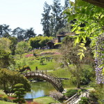 An Afternoon Stroll at The Huntington Library, Art Collections and Gardens