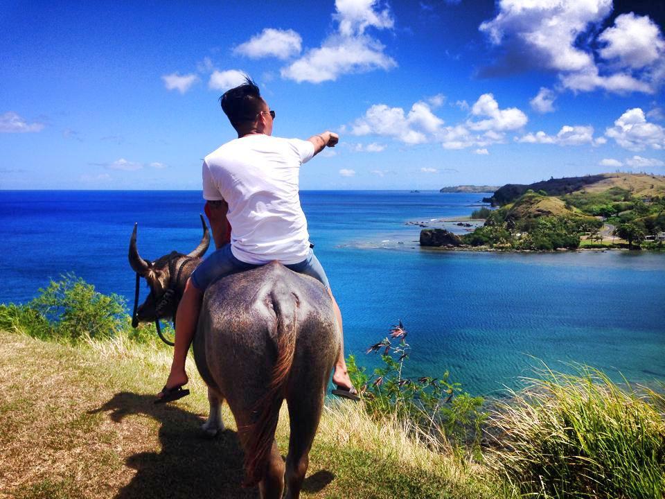 Guam carabao