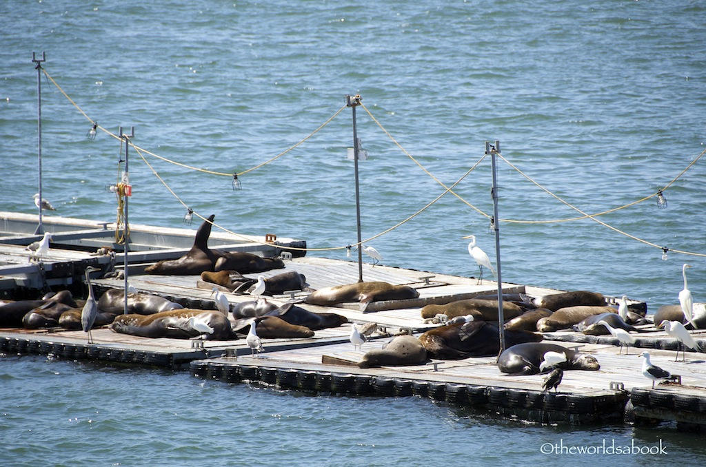 San Diego harbor seals