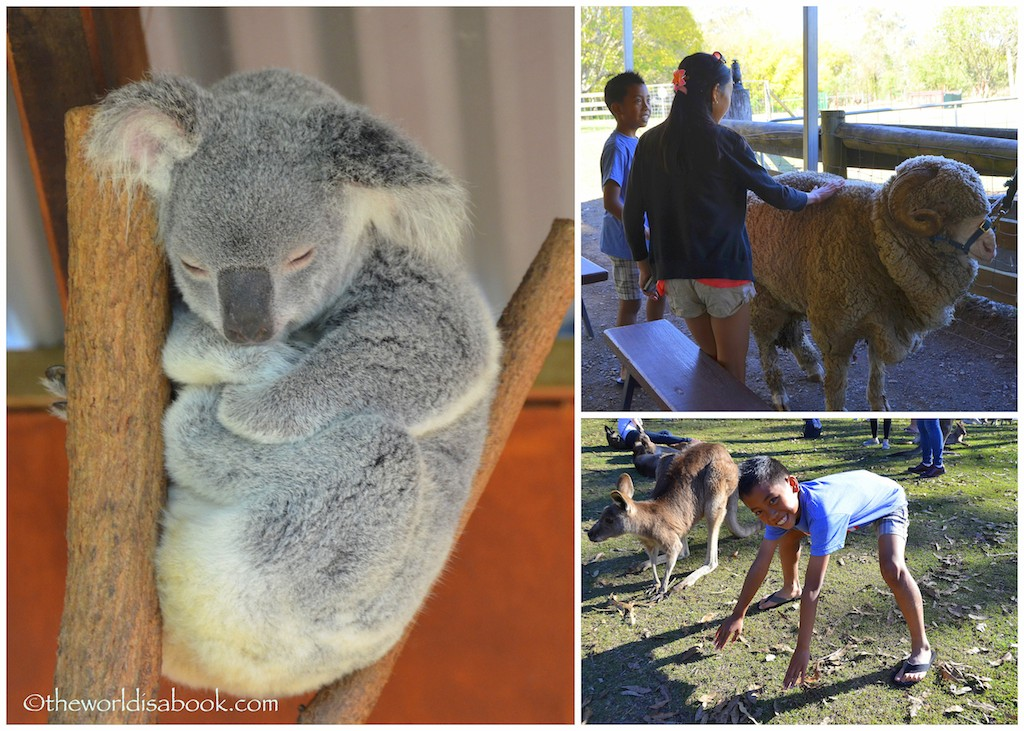 Lone Pine Koala Sanctuary with kids