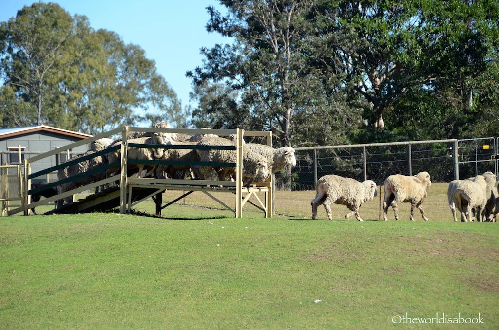 Lone Pine sheep herding