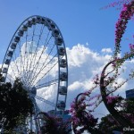 South Bank Parklands: The Playground of Brisbane