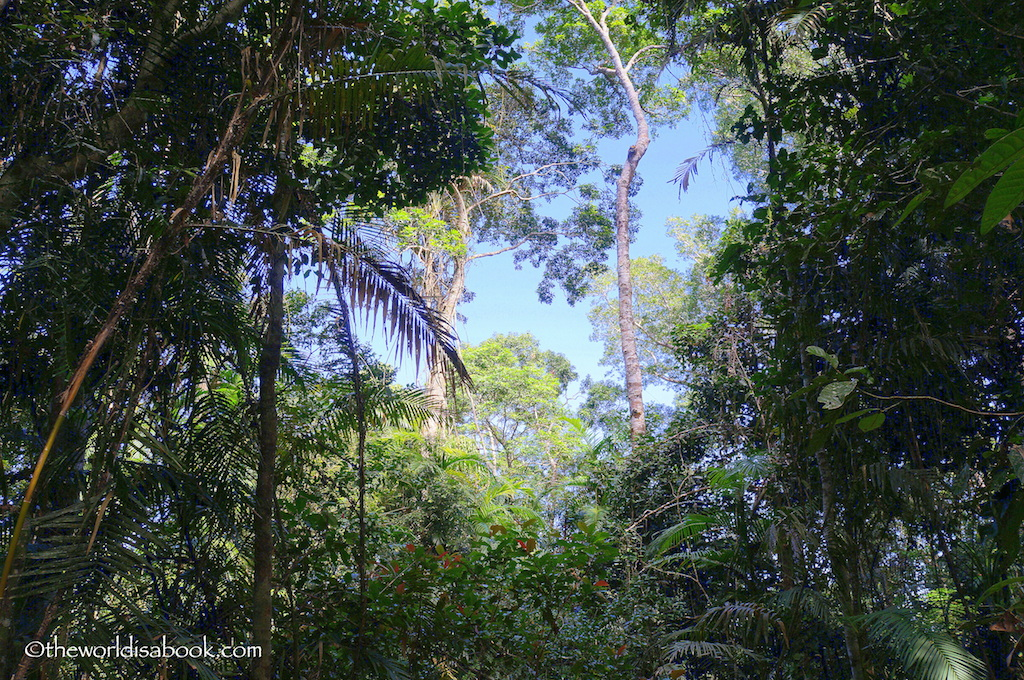 Rainforest canopy Skyrail
