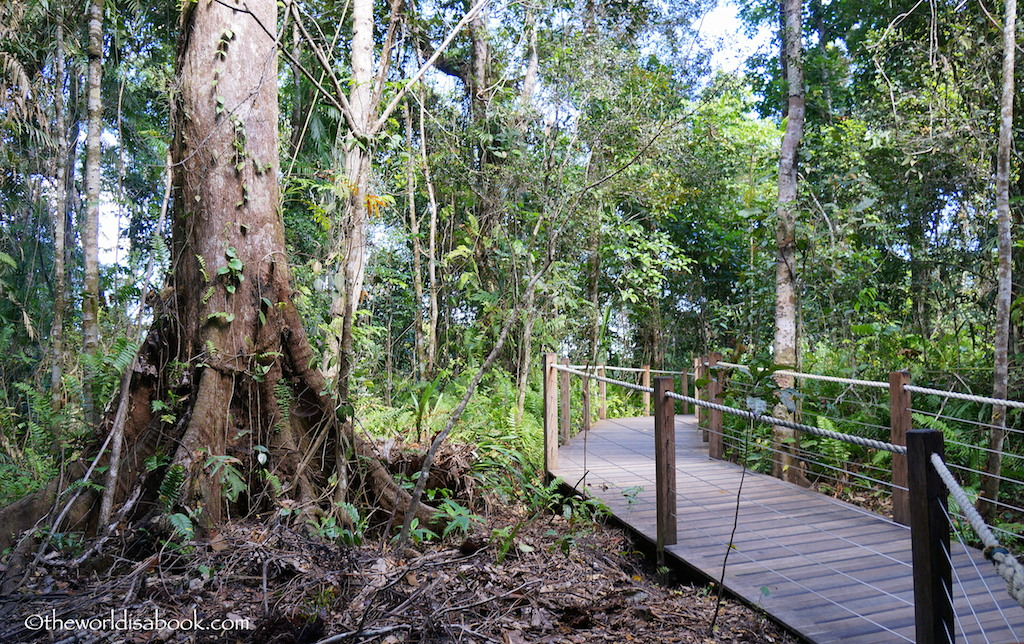 Skyrail Rainforest boardwalk