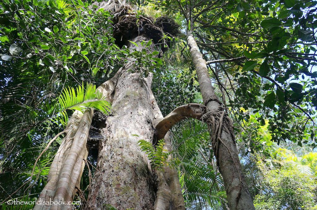 Skyrail tropical rainforest