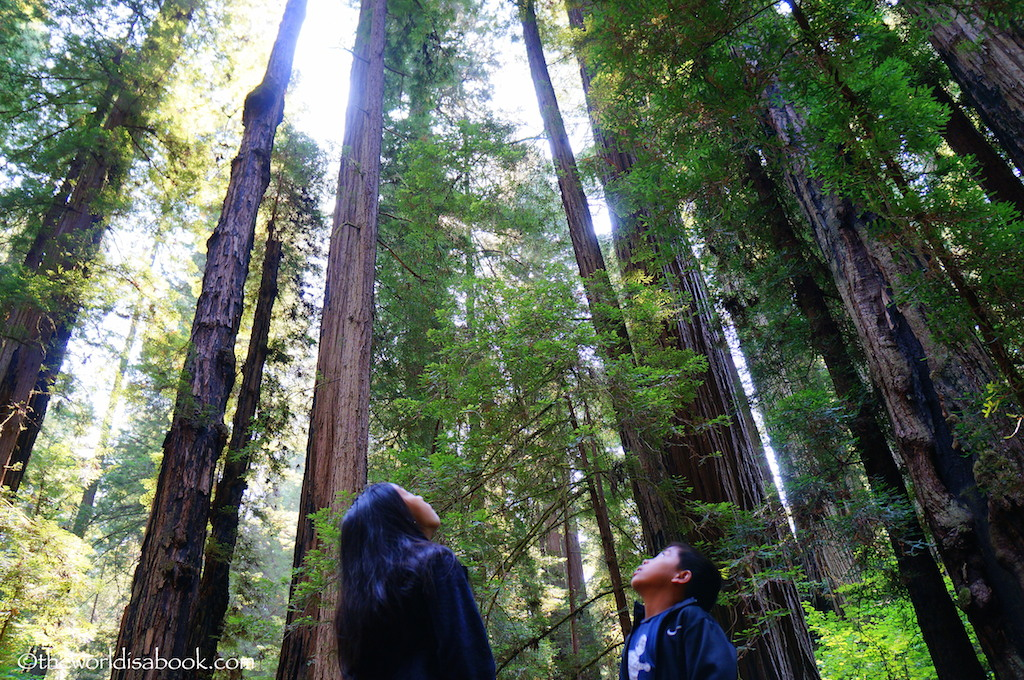 Redwood National State Park with kids