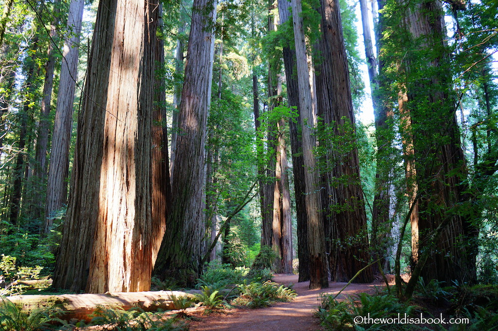 Redwood Stout Grove Trail