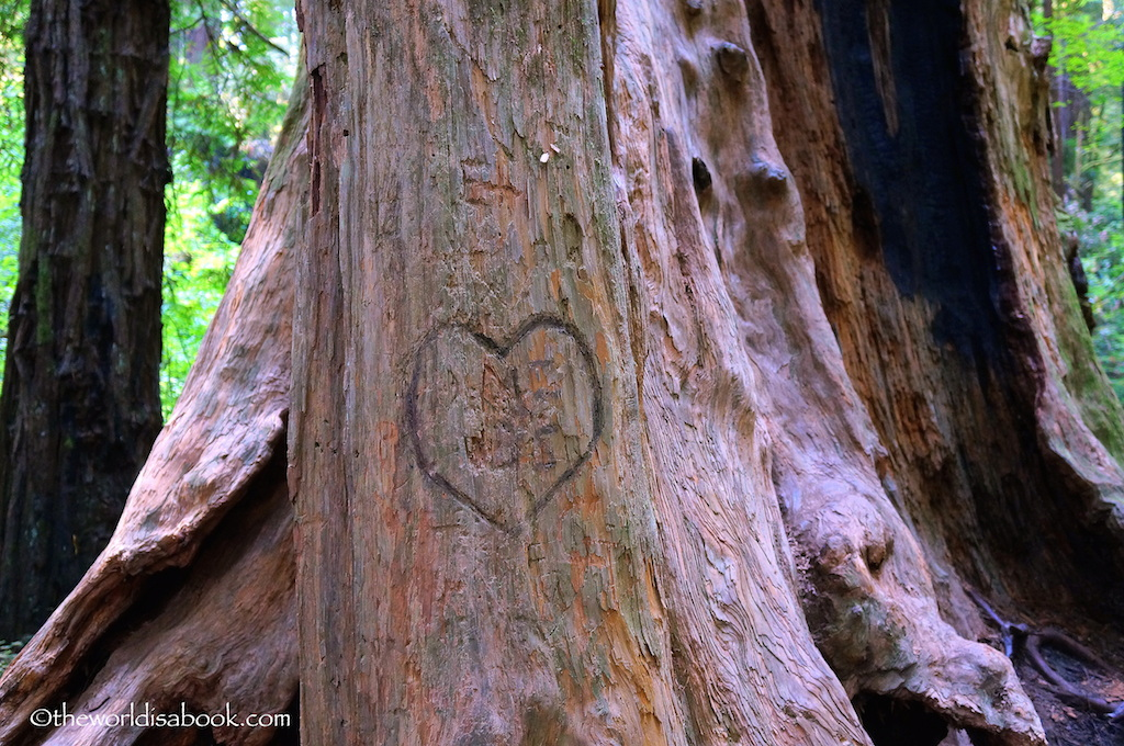 Redwood tree grafitti
