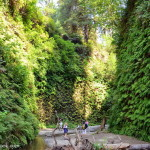 Hiking the Redwood National Park's Fern Canyon