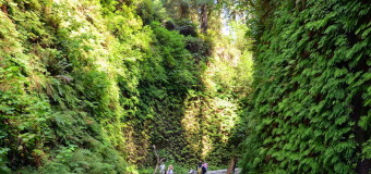 Hiking the Redwood's Fern Canyon