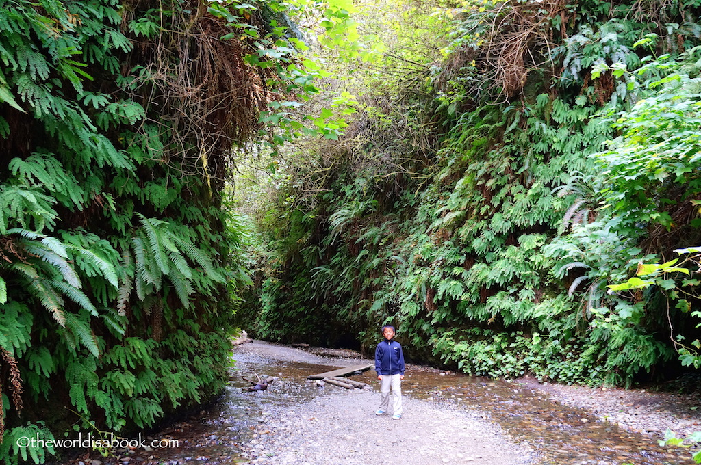 Fern Canyon Trail with kids