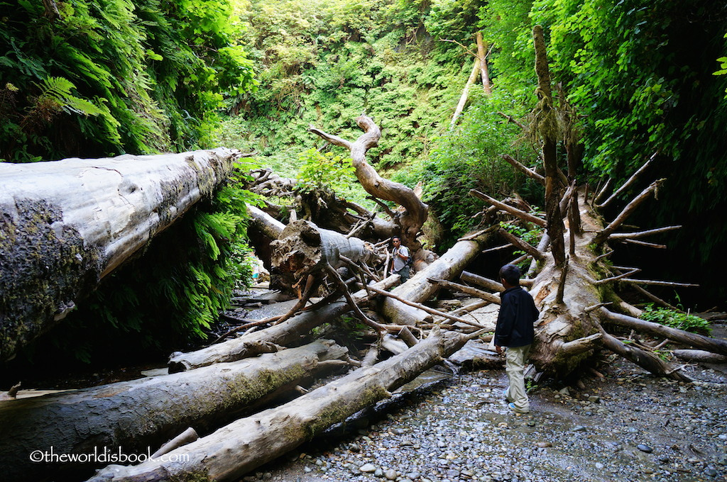 Fern Canyon fallen trees
