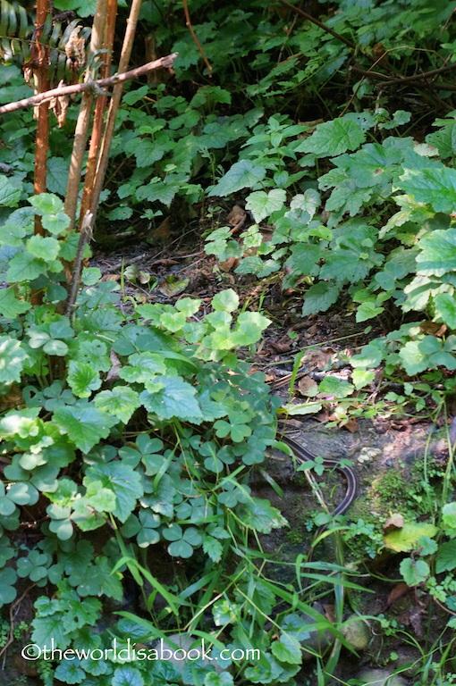 Fern Canyon garter snake