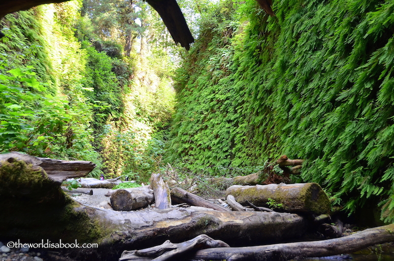 Fern Canyon logs