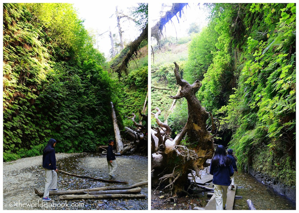 Fern Canyon with kids footbridges