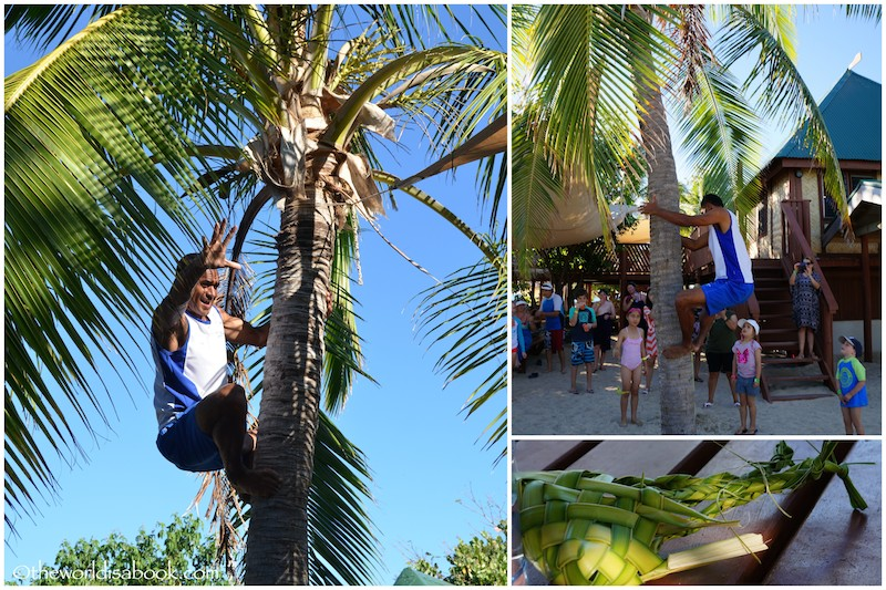 South Sea Island Fiji climbing coconut