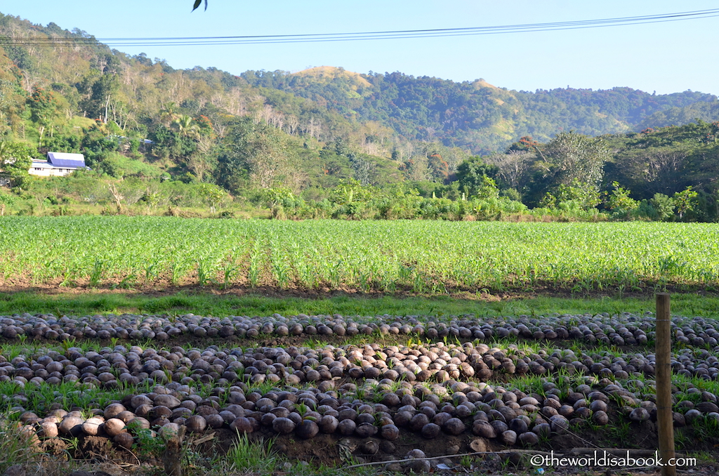 Fiji farmland
