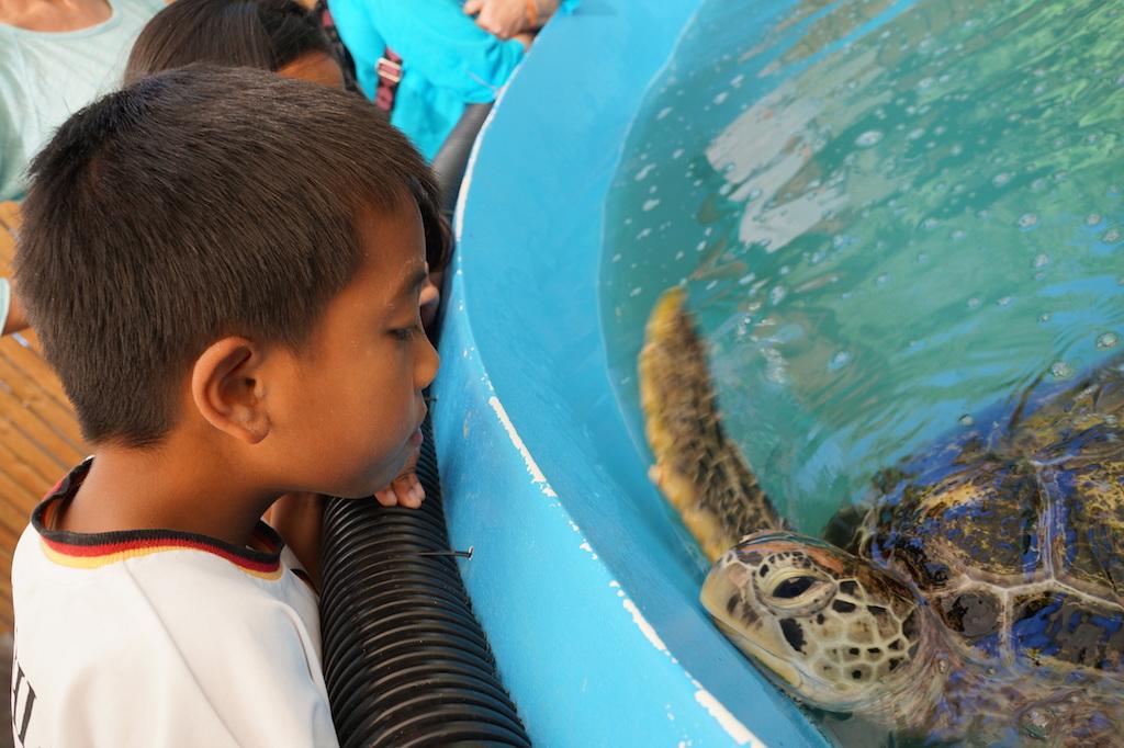 Fitzroy Island Turtle Rehab