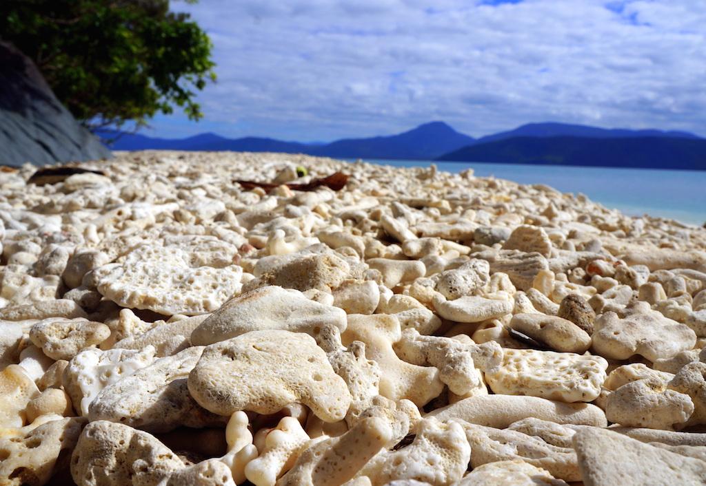 Fitzroy Island Coral Nudey Beach