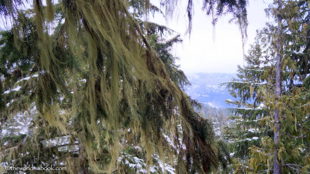 Whistler lichen