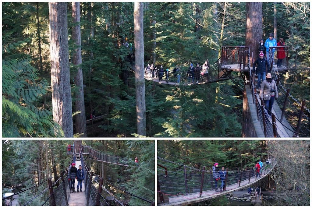 Capilano Treetop Adventures