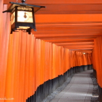 Trekking Through 10,000 Torii at Fushimi Inari Shrine Kyoto