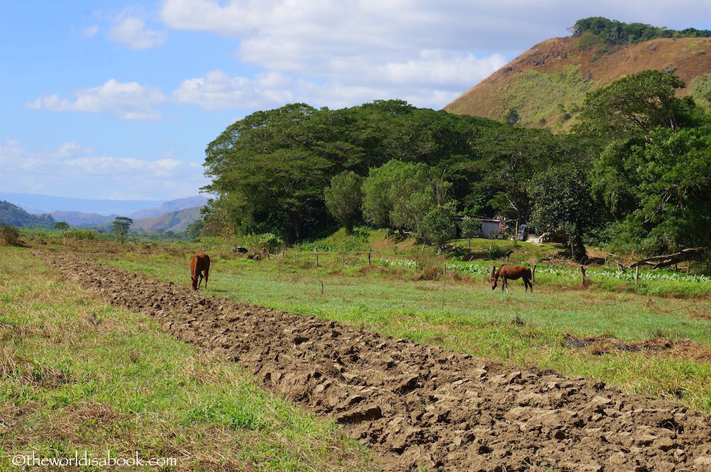 Fiji Sigatoka River Village horses
