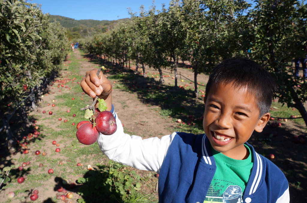 Julian apple picking