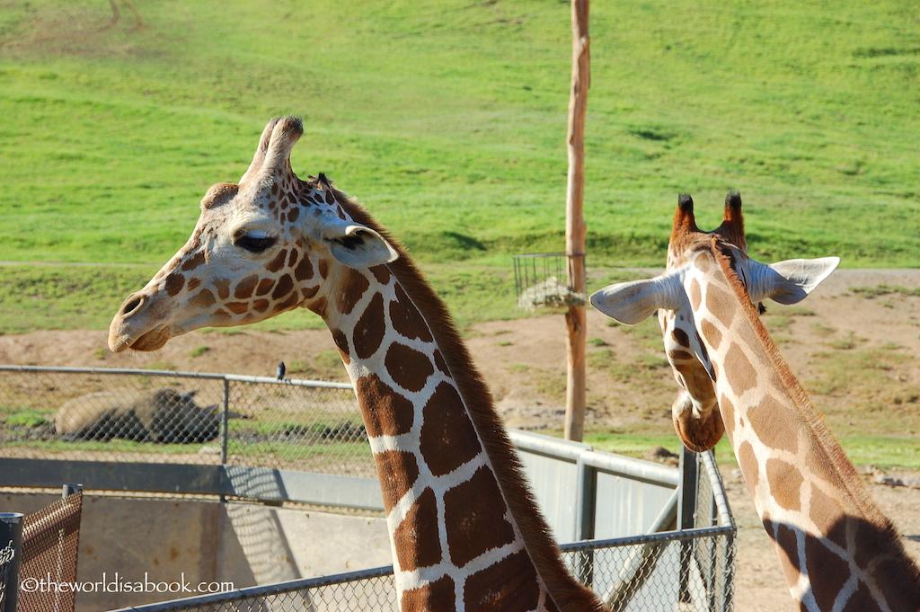 San Diego Zoo Safari Park giraffe