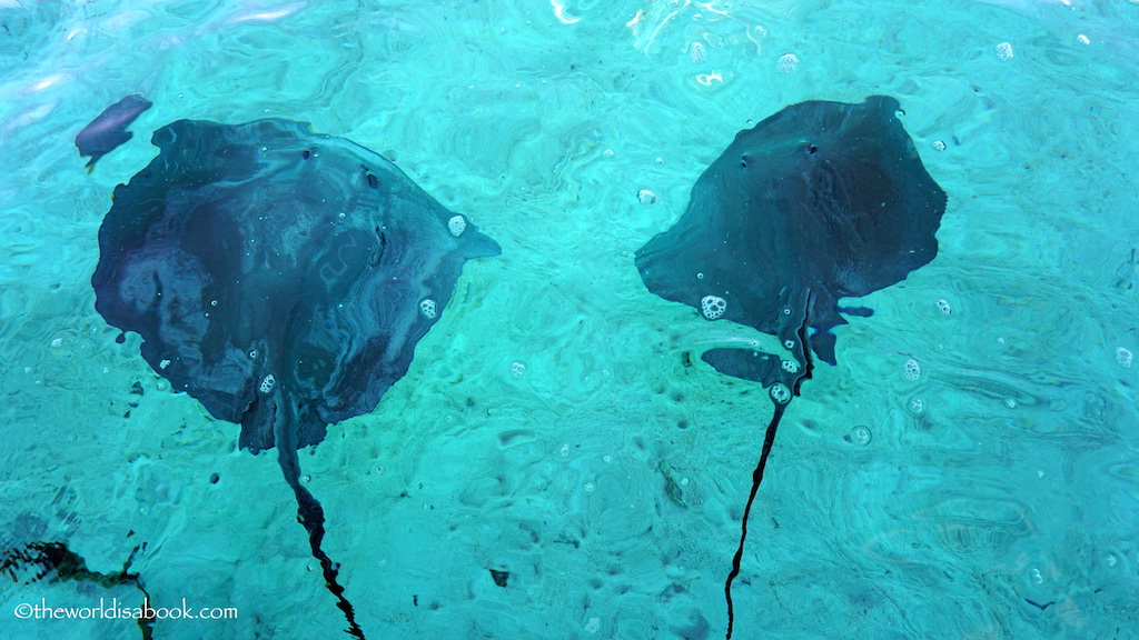 Bora Bora stingray excursion