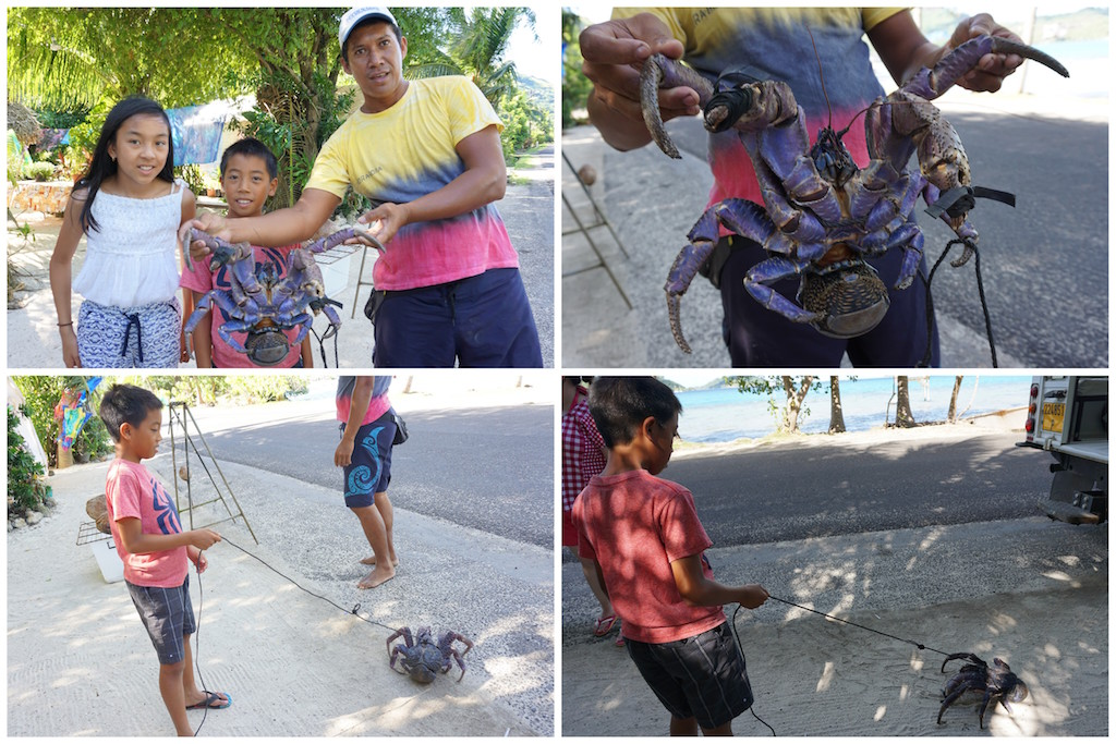 Bora Bora coconut crab