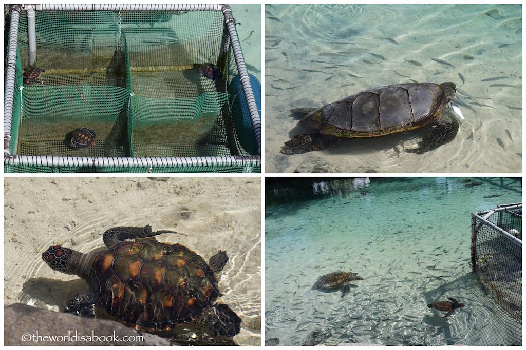 Moorea Turtle Rehab Clinic