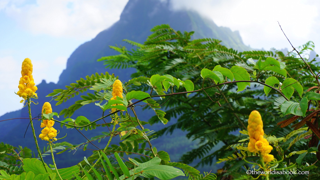 Moorea mountains and flowers