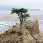 25 Things to do in the California Central Coast with Kids